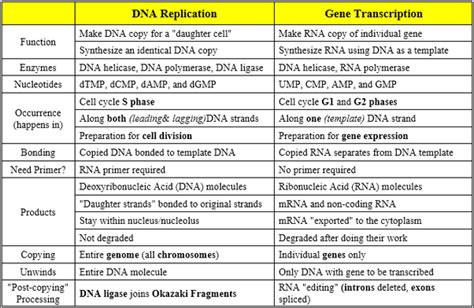 Transcription and Translation Worksheet Answers Dna Rna Replication Transcription and Translation Worksheet