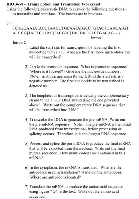 Transcription and Translation Worksheet Answers solved Bio 3650 Transcription and Translation Worksheet