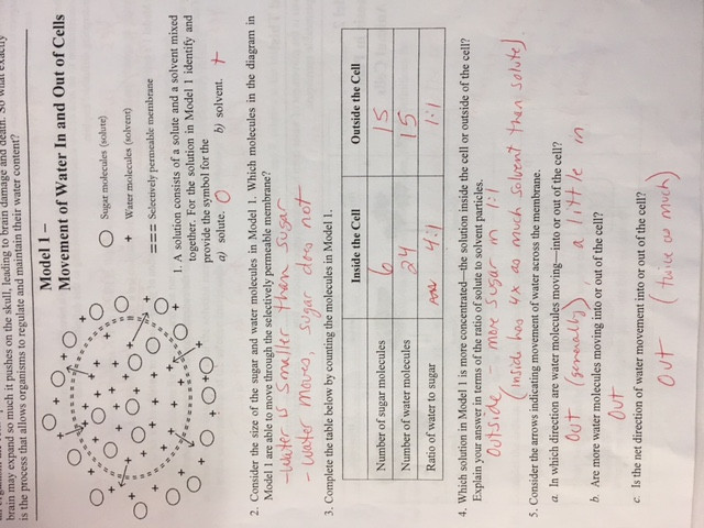 Transport In Cells Worksheet Answers Biology 2016 17 Mrs Sheets Cahs Sciences