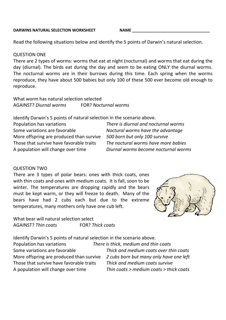 Types Of Natural Selection Worksheet Pin by Maria Agatha On Worksheet